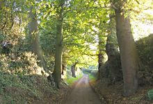 Quiet old lane